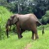 small_elephant