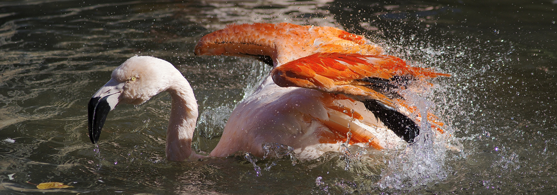 1140x400_flamingo