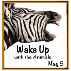 Wake Up With the Animals Roars Back in May